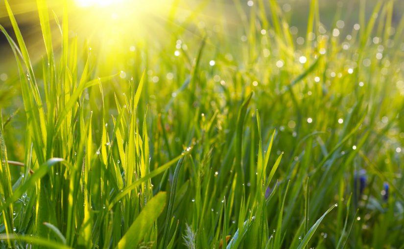 Косить мокрую траву не рекомендуется в целях безопасности