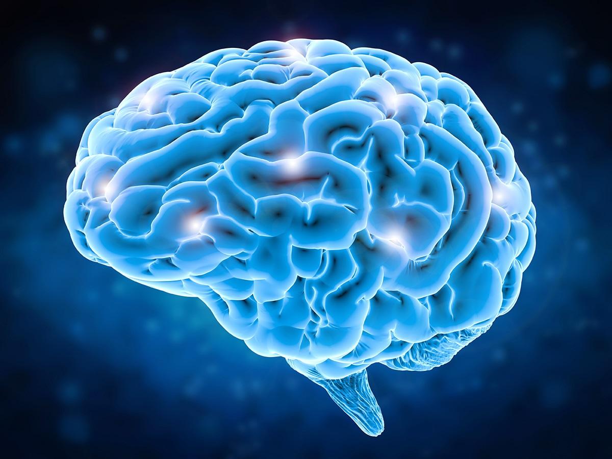 1574750570_brain.jpg