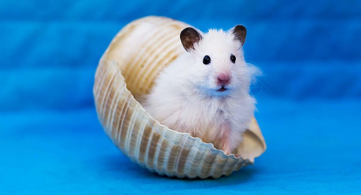 1582039746_can-hamsters-swim-ma-long.jpg