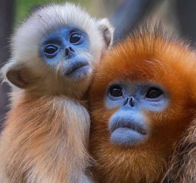 17 animaux rares dont vous ne pouvez pas croire l'existence – DE ...