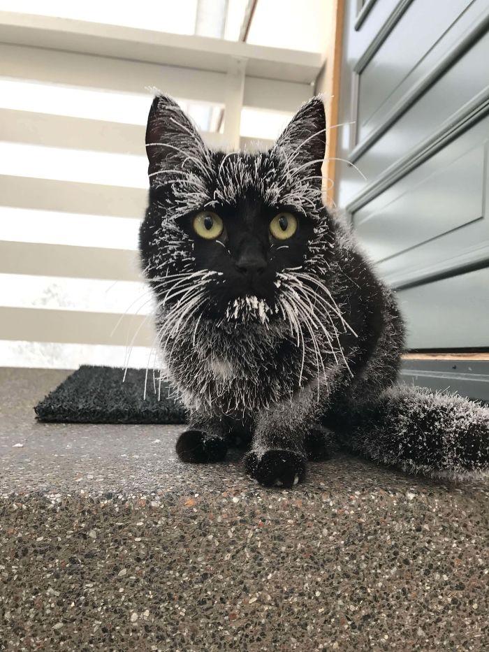 Черный кот картинки прикольные