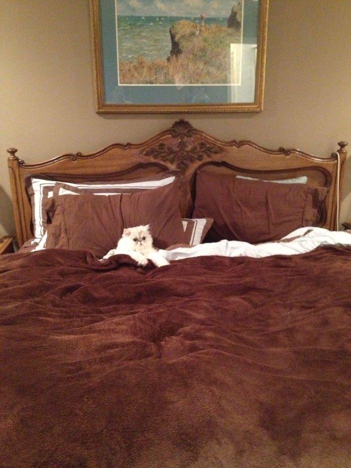 55 домашних животных, которые решили, что кровать хозяев их личная собственность