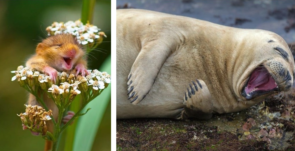Мир природы в фотографиях: от дружелюбных акул и смеющихся мышей до неуклюжих сов и даже танцующего осьминога