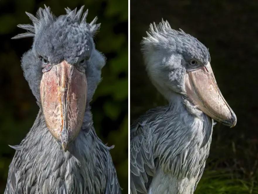 17 птиц, которые выглядят так, как будто они полностью выдуманы, но на самом деле на 100% реальны