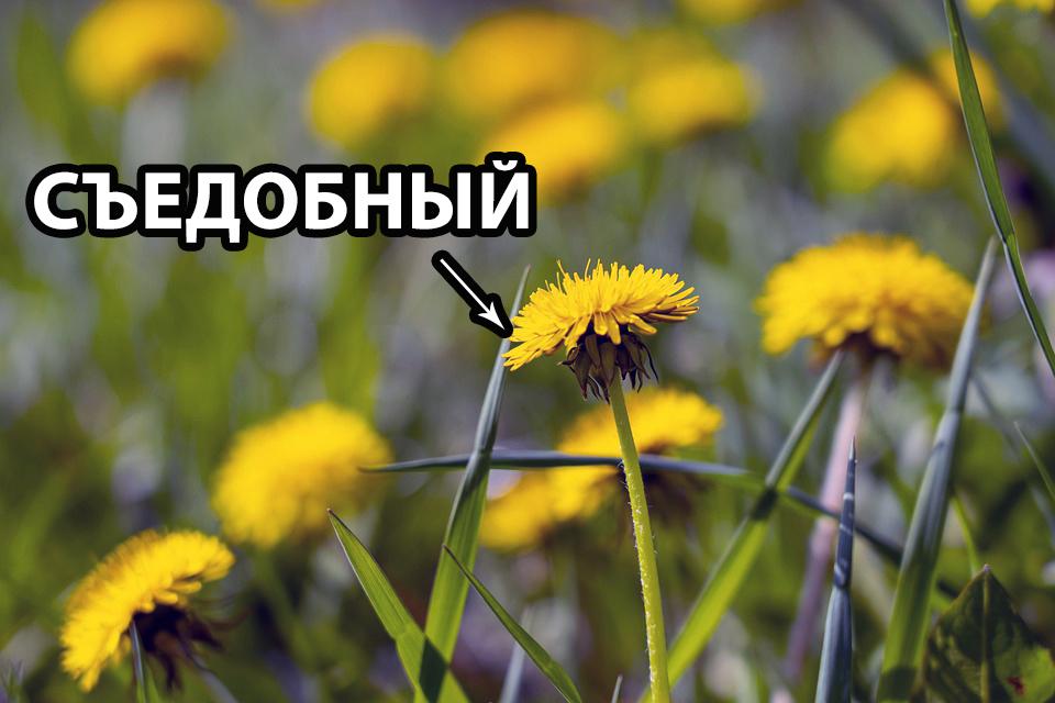 1594106140_1-1.jpg