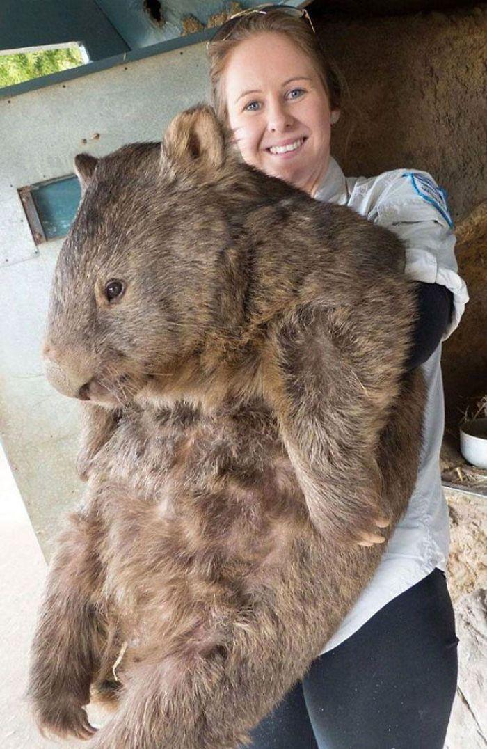 35 фото животных в сравнении, которые показывают, насколько они огромны