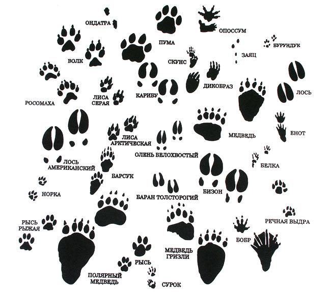Бушкрафт: 20 советов для выживания вдикой природе