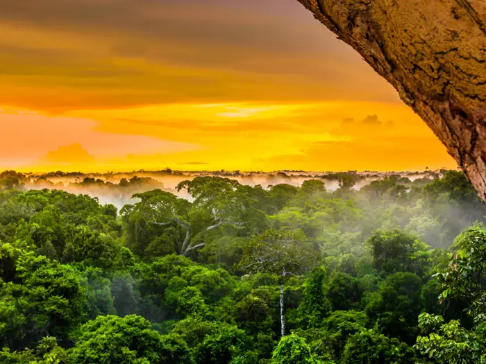 20 красивых лесов со всего мира, которые показывают, насколько великолепна природа