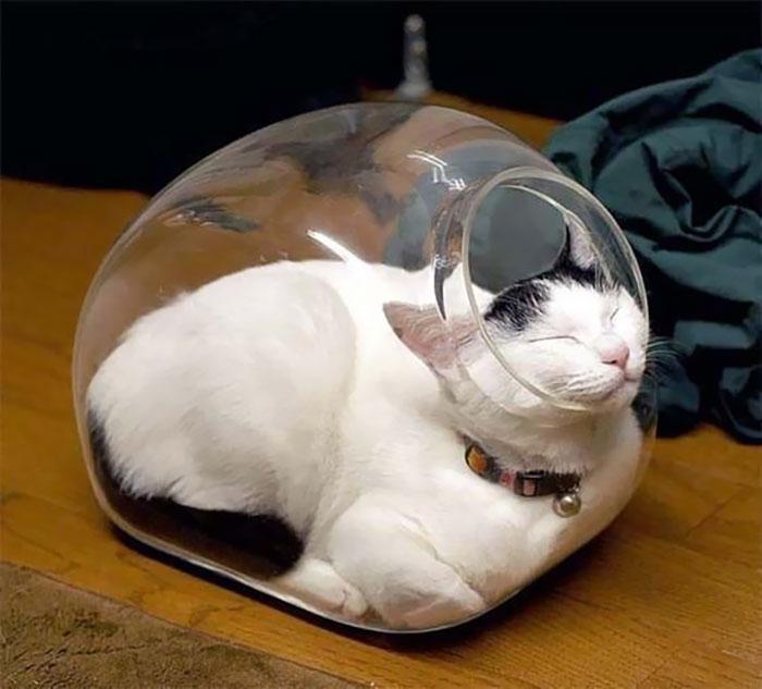 70 кошек, которые спят, где угодно, но только не там, где им следует это делать