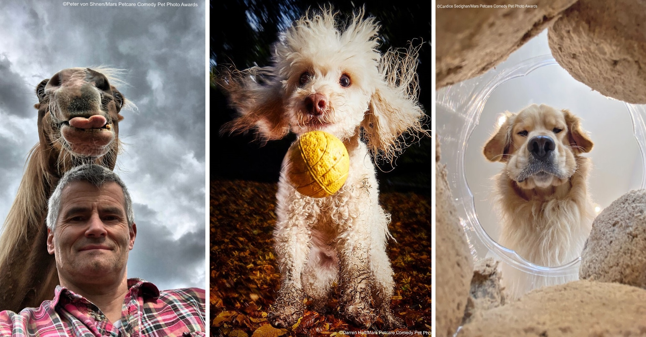 40 лучших смешных фотографий животных 2020 года, по версии Comedy Pet Photography Awards