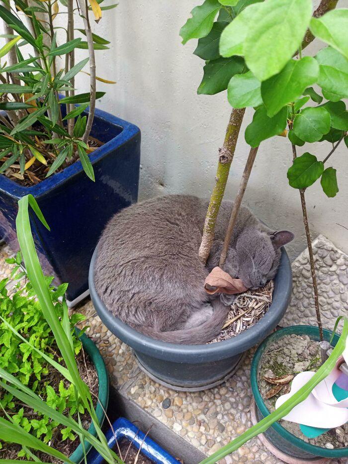 85 умильных фото спящих кошек, которые своим видом поднимут настроение до 100 процентов (особенно полезно для тех, у кого стресс)