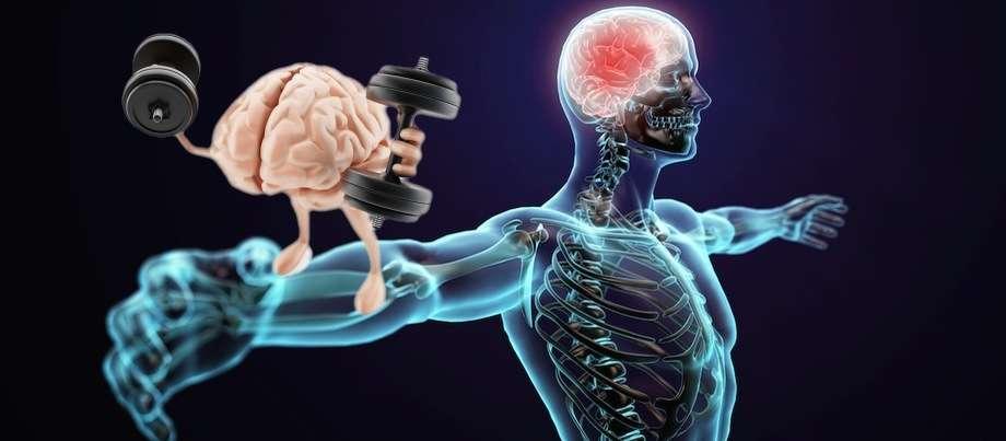 Как вернуть утраченные мышцы после длительного отсутствия тренировок