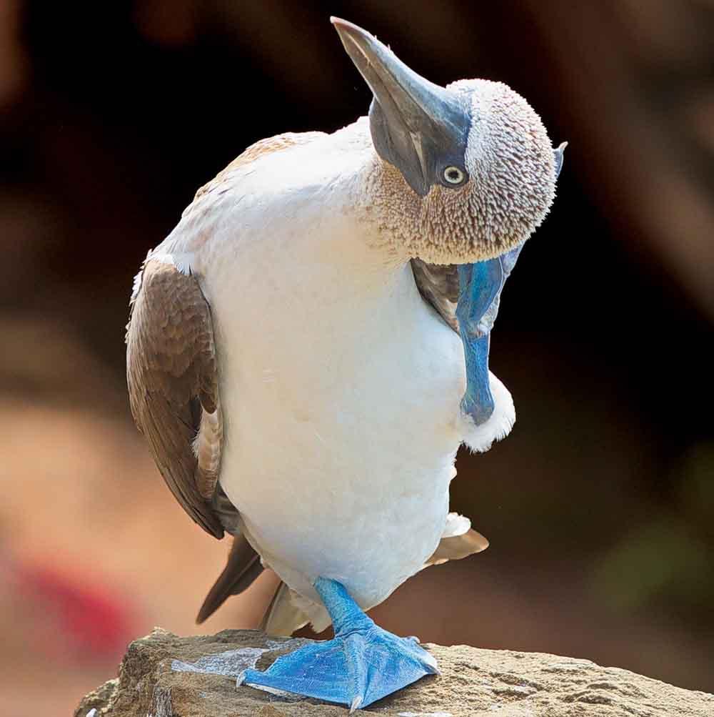 30 птиц со странными названиями, которые показывают, что у орнитологов закончились нормальные имена
