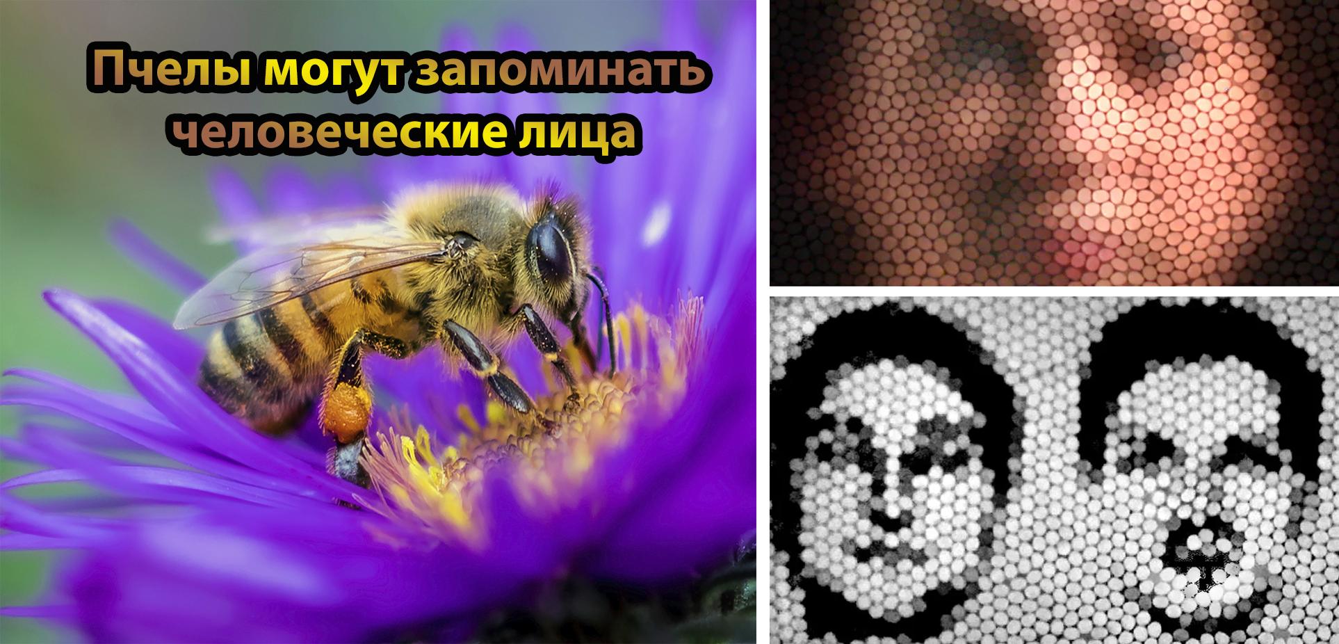 8 фактов о пчелах, маленьких тружениках, которые стоят того, чтобы немножко удивиться
